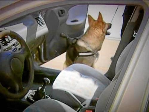 perros-unidad-canina-policia-local-trigueros1.jpg