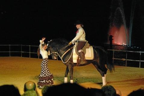 tripavisor-cabalo