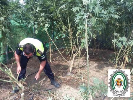 un-agente-en-el-invernadero-de-marihuana-desmantelado-en-trigueros