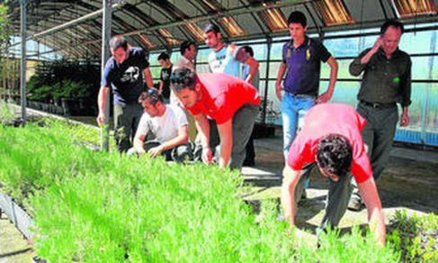 alumnos-realiza-labores-jardineria-escuela_594850685_18405185_1707x1024